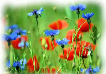 Meadow Flowers - flowers, meadow, art, wildflowers