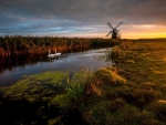 swans in a river by a windmill