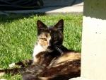 Cat Lying on Cute
