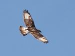 flying away(hawk)