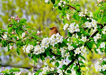 Bird In Spring Flowers Flowers Nature Background Wallpapers On