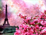 Paris spring in pink
