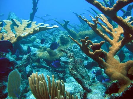Coral Reef in St. Croix, US Virgin Islands - Nature, Underwater, Oceans, Coral Reefs