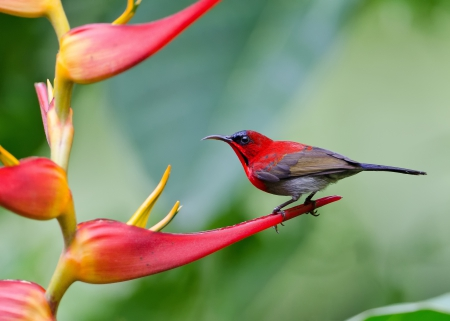 Spring Flowers And Bird Birds Animals Background Wallpapers On