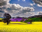 Colorful Fields