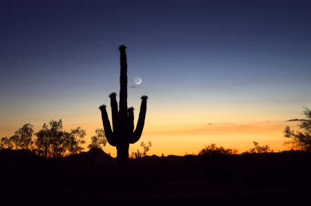 Twilight Cactus - loud, outrage, astonishing, sunset, incredible, outrageous, prodigious, peachy, blowing, God, best, top, untamed, uncommon, super, astounding, quiet, desert, spines, south, tops, nightfall, crescent, spectacular, untame, office, extravagant, impressive, breathtaking, superb, moon, immense, inconceivable, color, grand, regard, blue, cloud, first class, spectacle, marvelous, striking, heat, unreal, admiration, primo, 1st, marvel, saguaro, breathe, Create, orange, dramatic, rad, dusk, greatest, Creator, stupendous, aces, tame, extra, legend, doozie, a-ok, out-of-this-world, astonishment, remarkable, respect, west, sky, cactus, legendary, impress, cool, awesome, great, 10, turn, groovy, arizona, breath, a-1, wonder, unbelievable, picture, astonish, wild, out-of-sight, dream, tamed, top drawer, ten, photo, turn-on, phoenix, terrific, 1st class, wonderment, fantastic, design, colors, phenomenal, on, fictitious, physical, fab, mesquite, Creation, first, feral, earth, mind blowing, natural, mind, admire