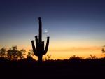 Twilight Cactus