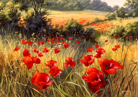 Bright Red Poppies F2