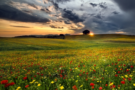 Sunset - spring time, sun, sunset, spring, sky, clouds, tree, sunrays, splendor, flowers field, flowers, nature