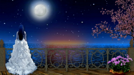 Romantic Night Oceans Amp Nature Background Wallpapers