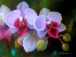 ★Orchid with Dewdrops★