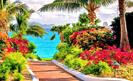 Beautiful shore flowers - colorful, sea palms, sky, sea, water, seashore, splendor, paradise, flowers, nature, lovely flowers, pathway to the sea