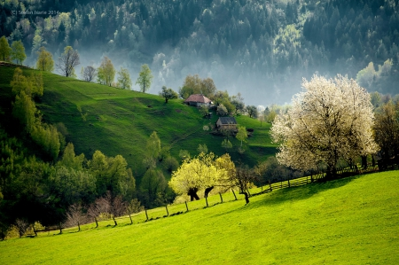Slovenien Landscape - mountain, green, houses, slovenia, pastures, beautiful, trees