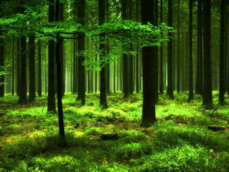 Lush Green Forests Amp Nature Background Wallpapers On