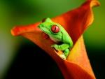 Frog Inside Orange Flower