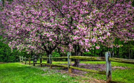 Spring - spring time, fence, tree, splendor, grass, flowers, nature, spring