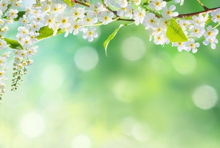 Spring Flowers - spring time, bokeh, spring flowers, flowers, nature, spring, petals