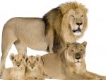 A Prideful Family