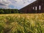 old viaduct bridge over wheat field