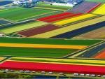 Tulip-National-Farm-Netherlands.