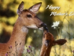 Fawn Kisses 2