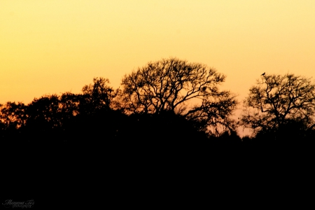 Sunset Behind the Trees - contrast, texas, sunset, trees