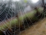 Dew Covered Spiderweb