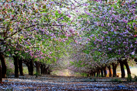 Image result for Springtime trees