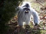 Unhappy Ewak (Ewok, chewbacca, Yeti or Abominable Snowman) ?