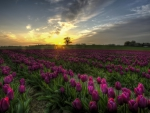Tulips World