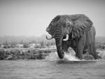 Stunning great elephant