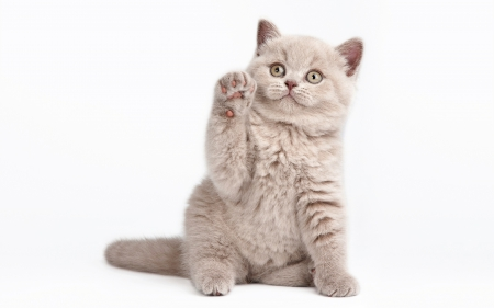 Hi! :) - hi, hello, paw, cat, animal