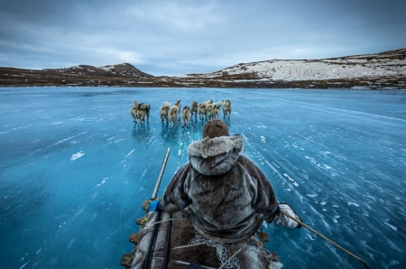 whaling - ice, whaling, dogs, greenland