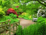 Wisley woodland