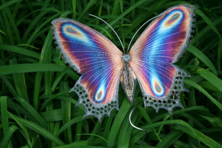 butterfly - bright, symmetry, colors, lines