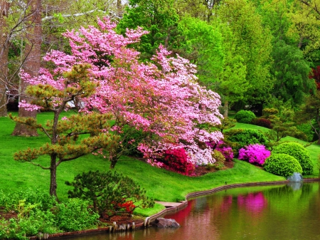 Spring colors - pretty, shore, grass, colors, beautiful, spring, park, trees, lake, pond, green, blossoms, garden, nature, reflection