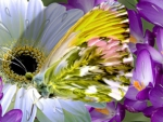 ~*~ Spring Butterfly ~*~
