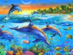 ★Dolphin Cove★