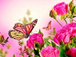 Pink Roses With two  Butterflies