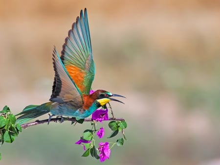 Comments On Colorful Bird Birds Wallpaper Id 1748227