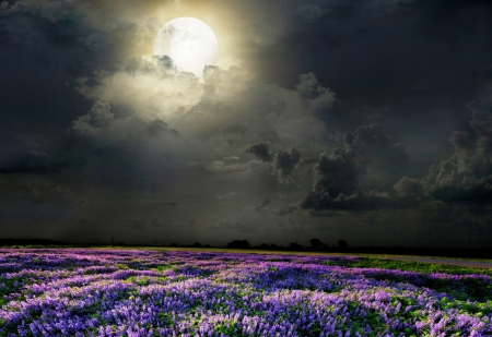 Field of lavender scented moonlight - image, space, lavender, clouds, magic nights, nice, splendor, colored, bright, flowers, beauty, moonlit, moons, brightness, black, panorama, cool, purple, coloured, smell, awesome, moonlight, violet, white, landscape, field, perfume, colorful, scenic, fragrant, beautiful, high quality, silver, scented, picture, photography, moon, green, darkness, scenery, light, blue, night, photo, amazing, odor, view, colors, hq, universe, dark, magical, nature, meadow, natural, scene, parfum