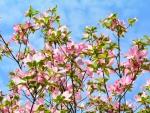 Blue Sky Spring