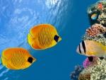 ♥Tropical Reef♥