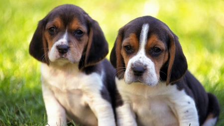 Sweet Sad Puppy Dog Eyes Dogs Animals Background Wallpapers On