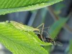 Assassin Bug 3