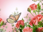 Roses and monarch butterflies