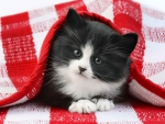 Black and white kitten under gingham