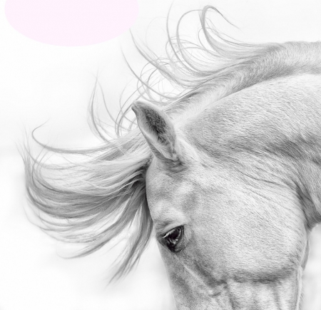 Horse Art Horses Animals Background Wallpapers On Desktop