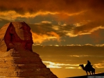 Sphinx at sunset with Camel