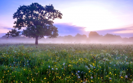 Spring Morning - spring time, grass, spring flowers, spring, sky, clouds, tree, splendor, early morning, flowers, nature, sunrise, morning, field, landscape